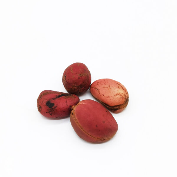 Noix de Kola rouge Bonjour Afrique Gold food Africa
